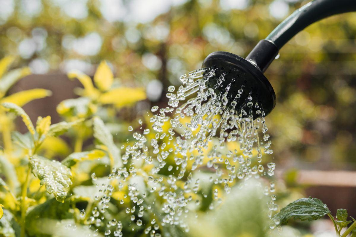 podlewanie roślin konewką